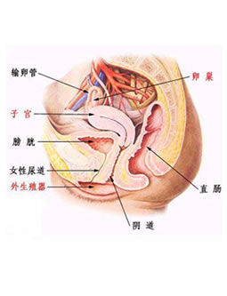 妇科炎症图片介绍